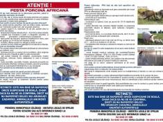 Pesta porcina (1)